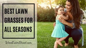 Best Lawn Grasses for Warm- and Cool-Seasons