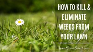 How to Kill and Eliminate Weeds from Your Lawn